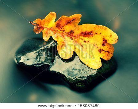 Detail Of Rotten Old Oak Leaf On Basalt Stone In Blurred Water