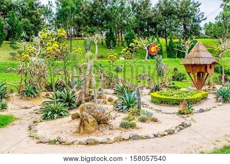 Landscape design with cactuses, sand, stones and wooden house in a park of flowers at Dalat Vietnam