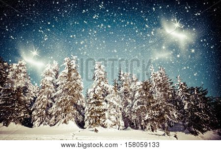 christmas background of snowy winter landscape with snow or hoarfrost covered fir trees and copy space - winter magic holiday