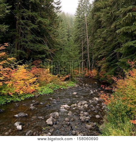 The Santiam River in Oregon is set ablaze in fall color.