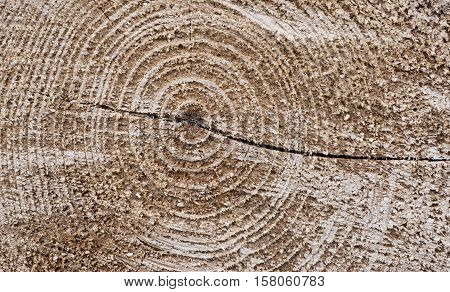 Wood texture cut tree trunk view down (background)