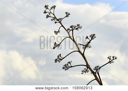 Plant near Offida in Marche Italy with clouds