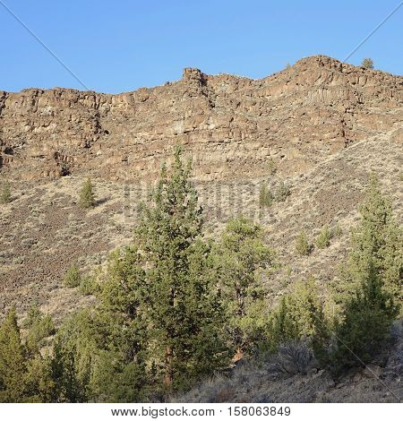 Thousands of years worth of rock layers form a hill covered in juniper trees in Central Oregon.