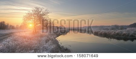Frosty winter morning. Bright winter sun shine on hoarfrost on grass through alone tree. Panoramic view on winter sunrise.