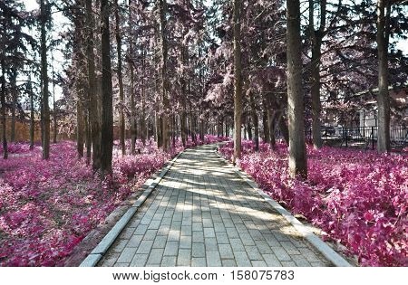 infrared landscape of Kaisariani park Athens Greece