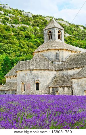 Abbey of Senanque and blooming rows lavender flowers. Gordes, Luberon, Vaucluse, Provence, France, Europe.