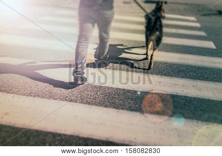 Pedestrian crossing. A young man passing through the street with a dog