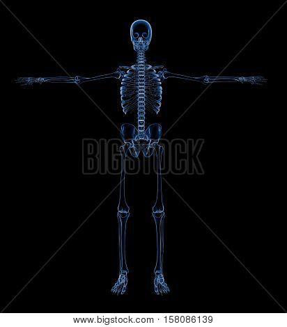 X ray skeleton skelet body. Anatomy concept. 3d render.