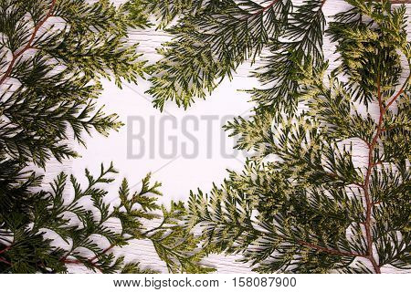 Fresh Green Spruce Twigs Lying On White Surface