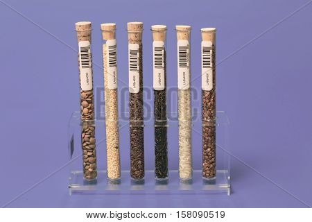 Seeds of agricultural plants in test tubes with bar code. GMO Test. This self-made labels with barcodes