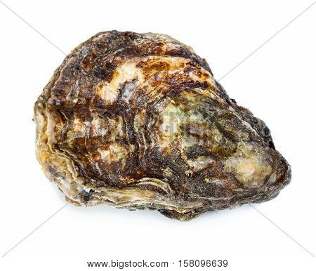 Gourmet fresh french oyster isolated on white background