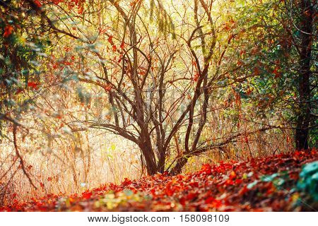 beautiful autumn fall forest surreal colors of fantasy landscape with trees branches and red yellow leaves on the ground