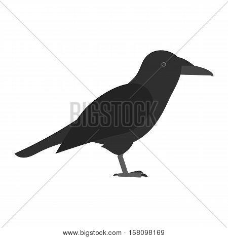 flat bird isolated on white background, beautiful vector illustration corvus corax, raven,