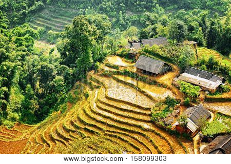 Village Houses And Rice Terraces Among Woods In Vietnam