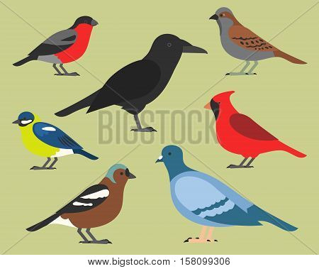 Set of flat birds, isolated on background. different tropical and domestic birds, cartoon style simple birds for logos. red cardinal. raven. dove. sparrow. common chaffinch. bullfinch