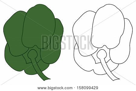 This is a vector illustration of a green bell pepper.