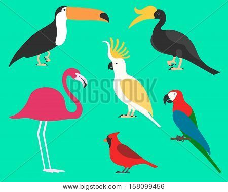 Set of flat birds, isolated on background. different tropical and domestic birds, cartoon style simple birds for logos. toco toucan. rhinoceros hornbill. cockatoo. parrot. ara. red cardinal.