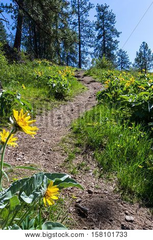 beautiful spring scene with blooming wildflowers and a rugged outdoors trail in Coeur d' Alene Idaho