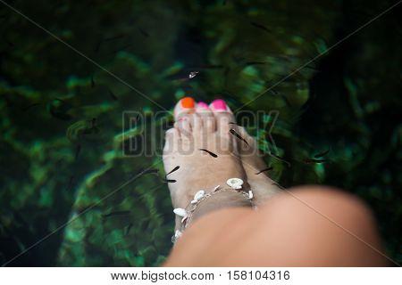 Natural Fish Spa Therapy