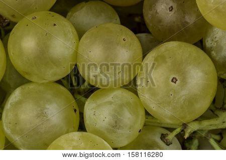 small green ripe grapes studio macro closeup