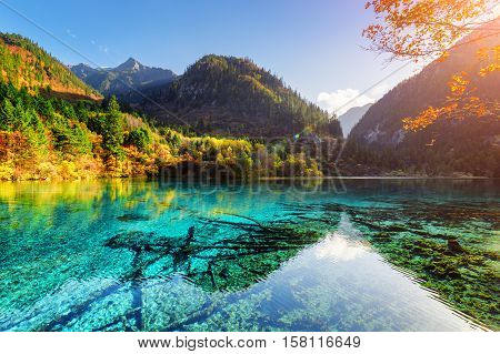 Colorful Woods Reflected In Azure Water Of The Five Flower Lake