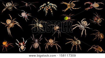 Set of realistic colorful spiders insect zoology entomology biology