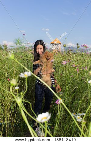 Thai woman and pomeranian with turbine in cosmos field, Muangkaen Chiangmai Thailand