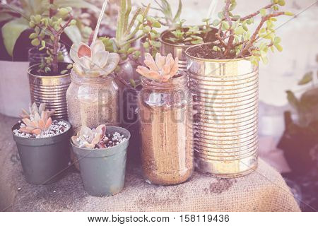 succulents in rustic tins Eco and reuse concept