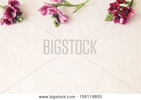 Maroon crimson red freesia flowers on linen toning copy space background
