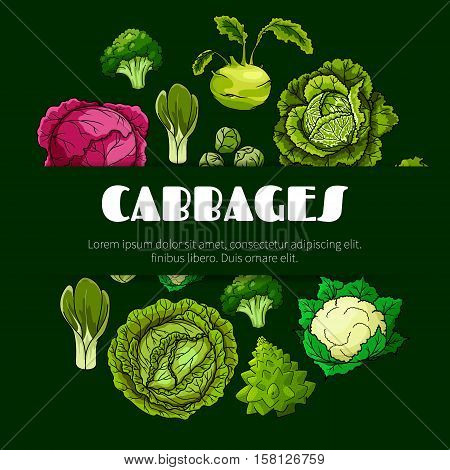 Cabbage vegetable poster with fresh green and red head cabbage, broccoli, cauliflower, kohlrabi, brussel sprout, romanesco cauliflower and bok choy. Vegetarian food, dieting, salad recipe design