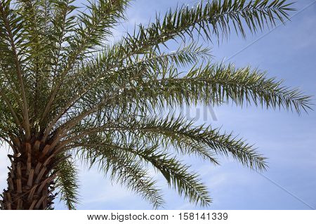 close up fresh green palm tree in nature garden