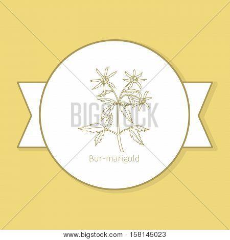 Bur-marigold medicine plant, yellow label design in circle shape. Vector illustration