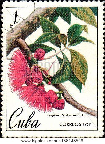 CUBA - CIRCA 1967: stamp printed in Cuba shows image of Eugenia Malaccencis , malay apple , circa 1967