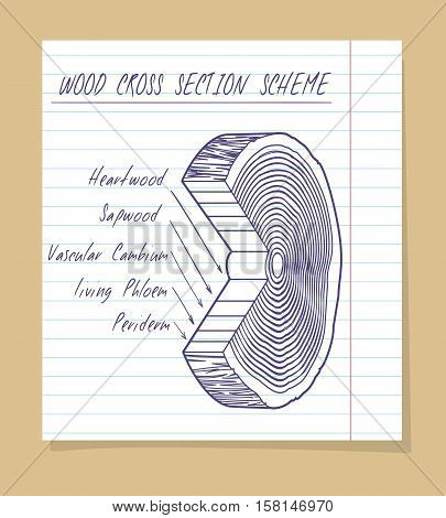 Wood cross section scheme on a notebook paper. Vector illustration