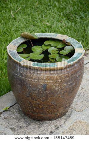 close up lotus pot in nature garden