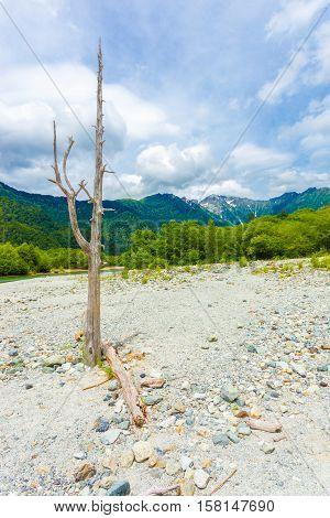 Kamikochi Dead Tree Riverbed Landscape V