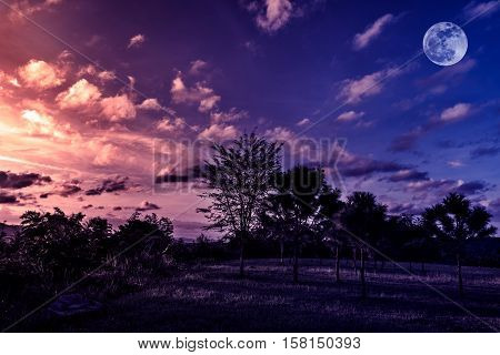 Trees against sky with clouds and beautiful full moon over tranquil nature on dark tone. Beautiful landscape under sunset moonrise is shining at national park in low light.