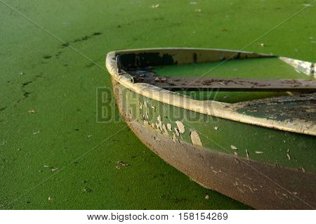 close up of part of green rowing boat submerged in water with algae