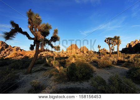Joshua Tree National Park at Sunset, USA