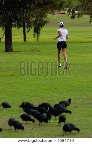 Excersing Woman Waterbirds