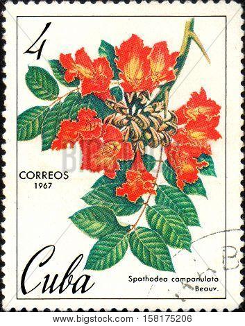 CUBA - CIRCA 1967: Stamp printed in Cuba shows image Spathodea campanulata, circa 1967