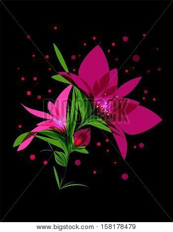 Beautiful magic pink flower on black background