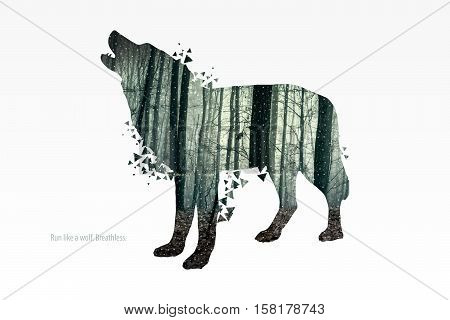 Illustration of wolf silhouette. Double exposure with photo of a green forest. Poster for nature lovers