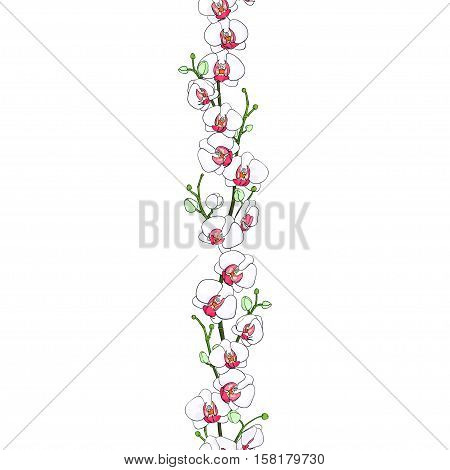 Seamless natural border of the branches of blooming white orchids with a bright center and buds. Phalaenopsis. Background. Hand drawn vector illustration.