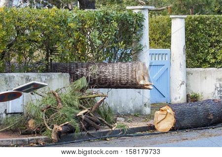 Storm Damage. Broken Tree In City