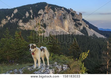 Alpine scenery with a white sheepdog in foreground