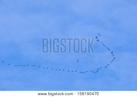 Cranes flying against a blue sky France