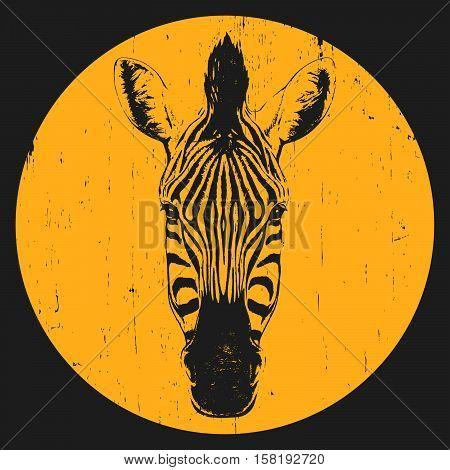 Portrait of Zebra. Hand-drawn illustration. T-shirt design. Vector