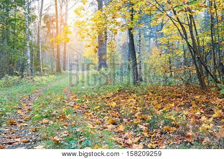 Beautiful autumn forest. Pathway through the autumn forest covert.