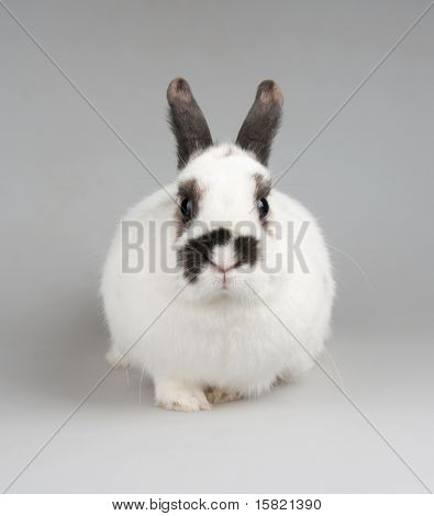 white rabbit with blask spots poster
